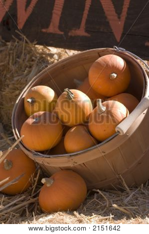 Pretty pumpkins for sale at the Annual Pumpkin Festival in the valley poster