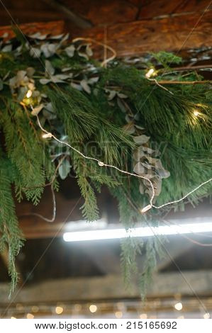 nature, winter, new year concept. among fresh and fuzzy green branches of different types of conifers trees there is thin line of electrical cord with small twinkle lights that are shining bright