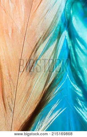 Abstract background with feathers and reflection. Beautiful stylish art work. Selective focus.