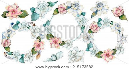 Wildflower gardenia flower in a watercolor style isolated. Full name of the plant: gardenia . Aquarelle wild flower for background, texture, wrapper pattern, frame or border.