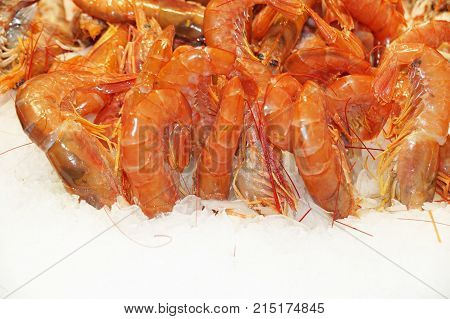 Fresh prawns lie on the cold ice. Sale of shrimp. Fresh seafood is isolated on ice. Red prawns isolated on white ice.