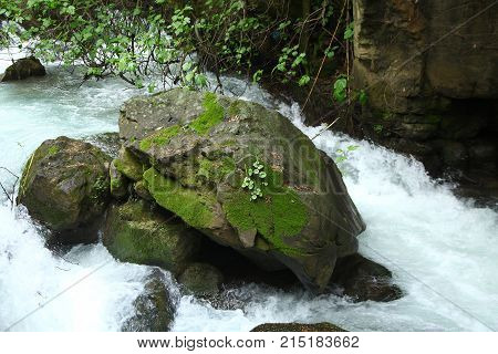 a big rock covered with lichen in a river