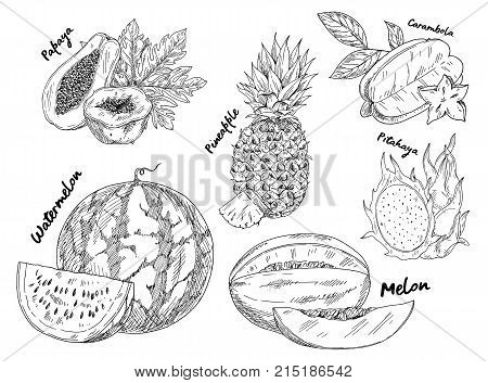 Set of isolated sketches of watermelon and pineapple or pine apple, ananas and pitahaya or pitaya, melon and dragon fruit, papaya or pawpaw or papaw. Vegetarian nutrition and fruit food, harvest theme