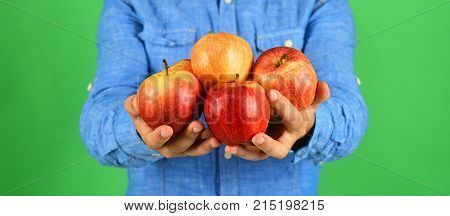 Farmers Hands Full Of Fresh Apples. Farming And Autumn Products