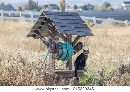 large cat sitting on a well in a field hunting for mice in summer