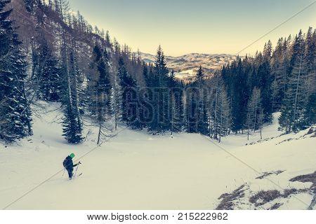 Back country skier reaching forest. Pokljuka, Slovenia