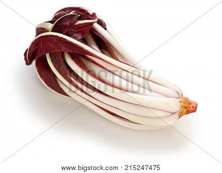 Красный цикорий