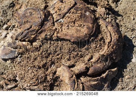 cow dung as organic fertilizer . In the park in nature