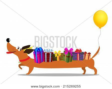 Cute cartoon long dachshund in birthday hat with balloon on the tail carrying gift boxes upon the back isolated on white background. Vector illustration clip art. Birthday greeting card character.
