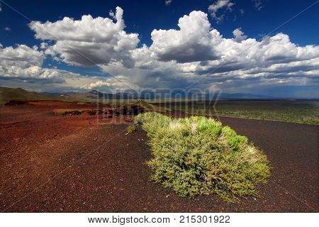 Flowers bloom amidst the rocky volcanic landscape at Craters of the Moon National Monument in Idaho