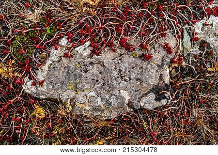 Large stone and wilted red plants. Steppe background. Natural texture
