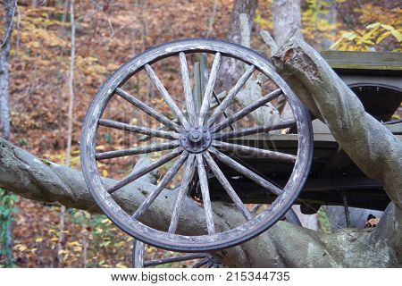 Old wood wagon wheel with spokes on tree branch