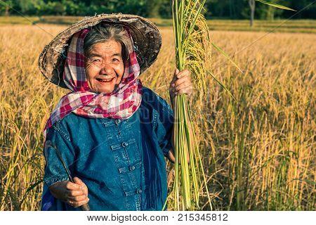 Farmer with rice harvest in farmer, Concept farmer.