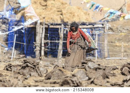 Chengdu, China - November 15, 2017: Woman In A Remote Part Of Sichuan Collecting Yak's Dung. Yak's D