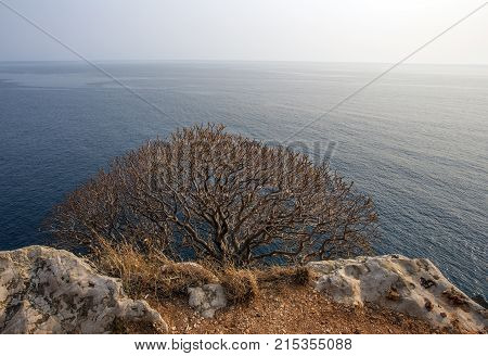 branchy tree on the mountainside in summer. on the horizon the blue sea.