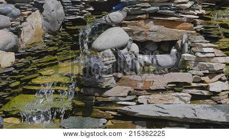 Beautiful Pigeon Sitting Near The Water Fountain