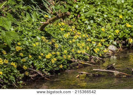 Wild flowers /Wild flowers / Wild flowers
