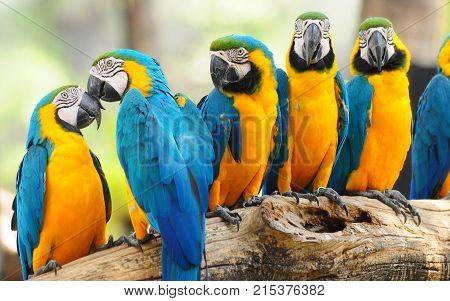six blue and orange color parrot looking beautiful
