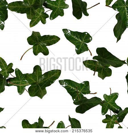 Green leaves of garden ivy on white background. Seamless pattern. Fresh spring summer mood