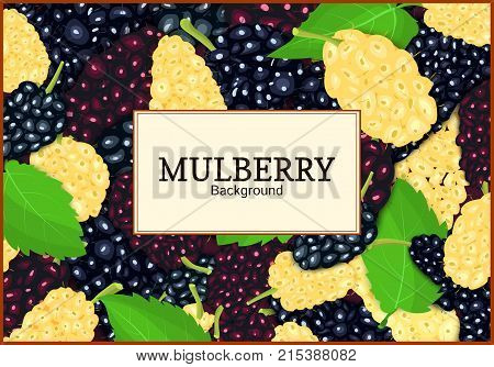 Rectangular label on ripe mulberry berry and leaves background. Vector card illustration. Mulberry beries fresh and juicy frame for design of food packaging juice breakfast tea detox diet