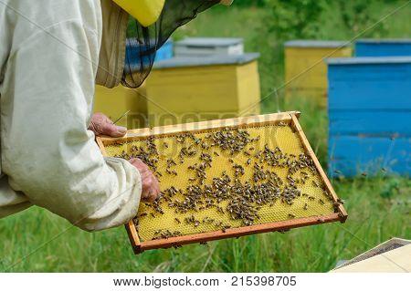 Frames of a bee hive. Beekeeper harvesting honey.Beekeeper Inspecting Bee Hive