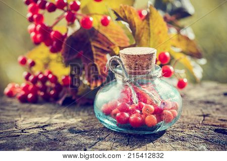 Bottles Of Guelder Rose Berries On Stump Outdoors, Red Viburnum Twig On Background, Herbal Medicine.