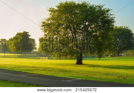 A large old tree stands in a grassy expanse of a large suburban park near Nashville Tennessee