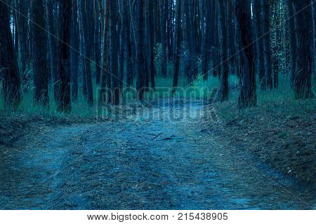 wide trail descends down into the mysterious evening forest of nobody around the fantastic atmosphere