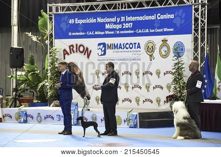 MALAGA SPAIN-NOVEMBER 25:in the imagen we see three people: two of them are participants of the excibition and the presenter of the act behind them is the stage with the poster of MIMASCOTA on November 252017 in MalagaSpain.