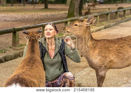 Tourist woman touches one of popular wild deer in Nara, Japan. Wild sika are considered a natural monument. Female caucasian traveler feeding two deer standing in Nara park. Tourism in Japan concept.