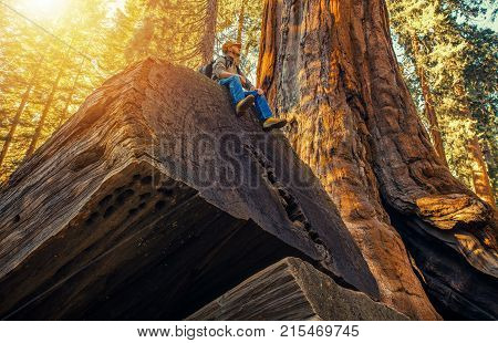 Sequoia Forest Hiker. Caucasian Men Seating on Ancient Fallen Sequoia Tree Log. Exploring Kings Canyon and Sequoia National Parks in California United States of America.