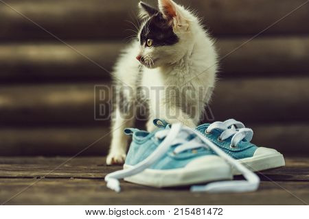 Cute Kitten Cat Playing With Blue Gumshoes