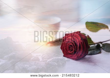 Lovely date. Close up of wonderful red rose lying on the table while creating romantic atmosphere