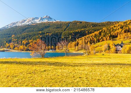 foliage in the woods around Lake Resia Italian eastern Alps