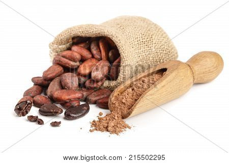 Cocoa beans in bag with cocoa powder in scoop isolated on white background.