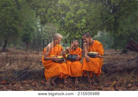 Three Neophyte monk are talking and holding the monk's alms bowl on the Timber of the tree at the countryside vintage color style process