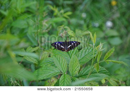 Beautiful Butterfly In Ukrainian Mountains