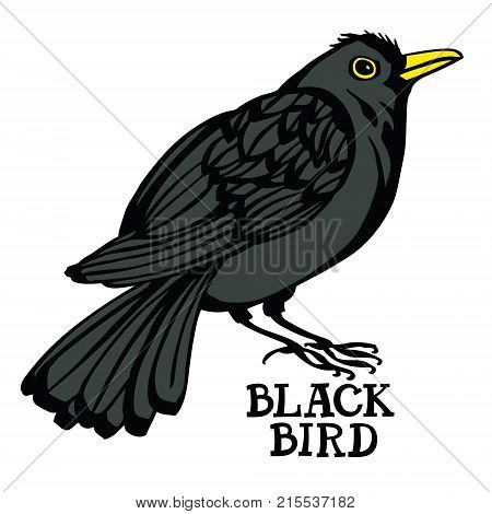 Blackbird Vector set isolated object Cartoon drawing