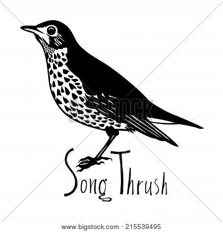 Birds collection Song Thrush Black and white vector Garden songbird