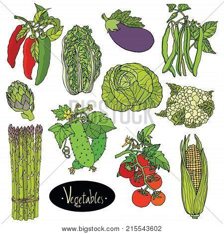 Fresh vegetables Vector set Eggplant cabbage peppers beans tomato cucumber asparagus cauliflower artichoke lettuce corn