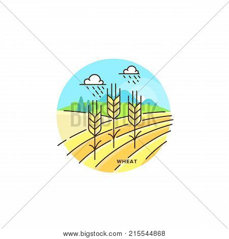 Farming field vector flat illustration in linear design. The wheat and farm landscape isolated on white background. Eco farming icon, logo in flat design, concept stock vector, element of agriculture.