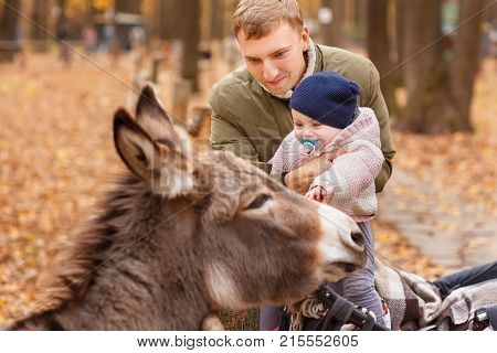 father with little daughter in contact zoo. Dad holding baby girl. Happy child stroking donkey in autumn park. Happy family, love to the animals, contact zoo, autumn season concept