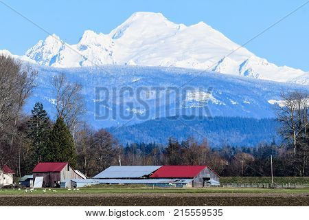 Snow Capped Mount Baker with Barn in Skagit Valley, WA