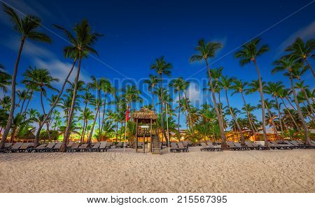 Palm tree on the tropical beach. Punta Cana, Dominican Republic