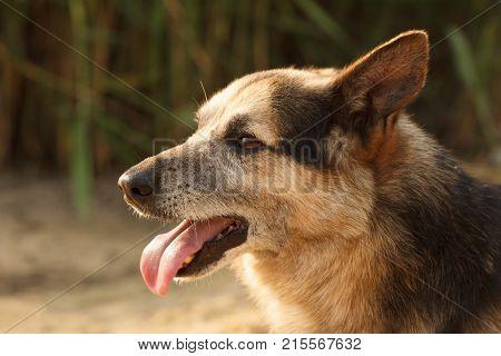 Dog face pet stray shelter close up.