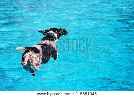 Cute Dog Swimming Image & Photo (Free Trial) | Bigstock