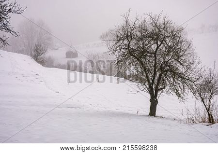 Naked Tree On Snowy Rural Hillside In Fog