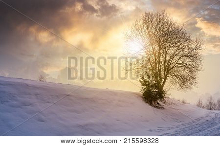 Leafless Tree On Snowy Slope At Sunset