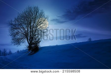 leafless tree on snowy at night in full moon light. lovely winter nature background