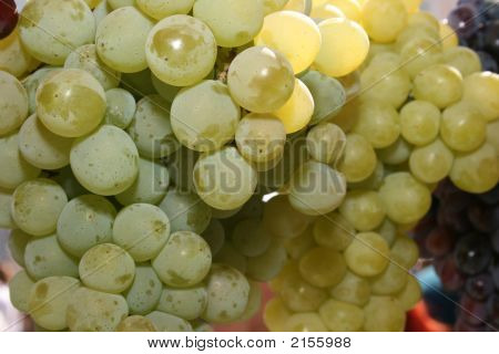 Bunch Of Mature Grapes 6